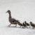 Сеть умилили утки, которые, соблюдая правила дорожного движения, переходят улицу на зеленый свет